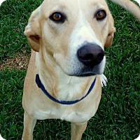 Adopt A Pet :: Deja Vu - Coppell, TX
