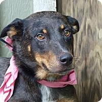 Adopt A Pet :: Gidget - Baton Rouge, LA