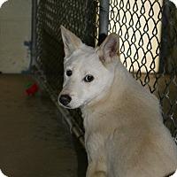 Adopt A Pet :: Foxy - East Smithfield, PA