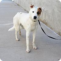 Adopt A Pet :: A24 Hyde - Odessa, TX