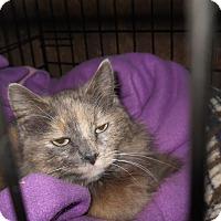 Adopt A Pet :: Nipper - Palo Cedro, CA