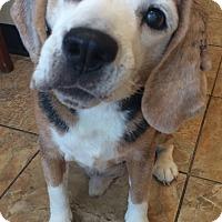 Adopt A Pet :: Tobie - Oak Ridge, NJ