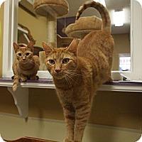 Adopt A Pet :: Spunky - Ocean City, NJ