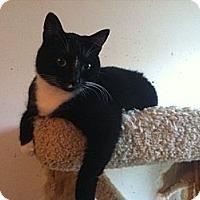 Adopt A Pet :: Oreo - Pittstown, NJ