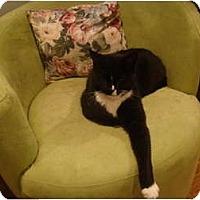 Adopt A Pet :: Ace--PETSMART - Muncie, IN