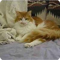 Adopt A Pet :: Rumbles - New Port Richey, FL