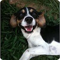 Adopt A Pet :: Toby - Arlington, TX