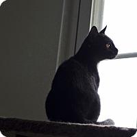 Adopt A Pet :: Benji - Jefferson, NC