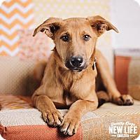 Adopt A Pet :: O'Malley - Portland, OR