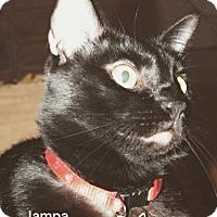 Adopt A Pet :: Jampa - Spring, TX