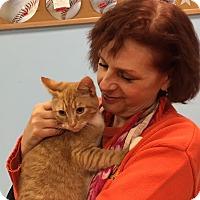 Adopt A Pet :: Belmont - Manchester, CT