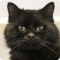 Adopt A Pet :: Jasper - Lincoln, CA