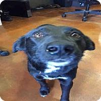 Adopt A Pet :: CASEY - Louisville, KY