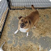 Adopt A Pet :: Bosco - Chewelah, WA