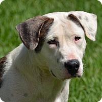 Adopt A Pet :: 10310392 - Brooksville, FL