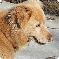 Adopt A Pet :: Francis - West Bridgewater, MA