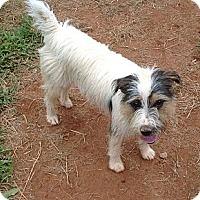 Adopt A Pet :: Sally - hartford, CT