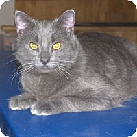 Adopt A Pet :: K-Hodnick3-Ashanti - Colorado Springs, CO