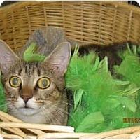 Adopt A Pet :: Savannah - Catasauqua, PA
