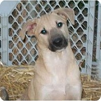 Adopt A Pet :: Piggie - Albany, NY