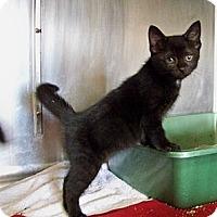 Adopt A Pet :: Reba - Dover, OH