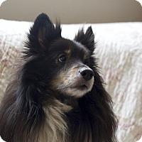 Adopt A Pet :: Kona - San Diego, CA