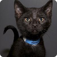 Adopt A Pet :: Cinders - Medina, OH
