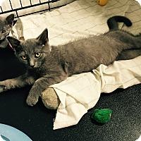Adopt A Pet :: Dirk - Speonk, NY