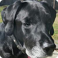 Adopt A Pet :: Rudy - Potomac, MD