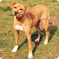 Adopt A Pet :: Aries - Maynardville, TN