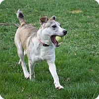 Adopt A Pet :: Kalisi - Sparta, NJ