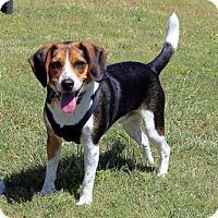 Adopt A Pet :: Rosco - Mansfield, TX