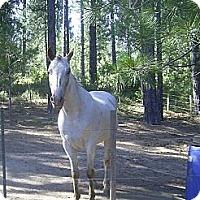 Adopt A Pet :: Adopted Gunner - Elverta, CA