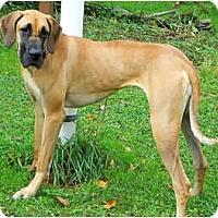 Adopt A Pet :: Madison - Pearl River, NY