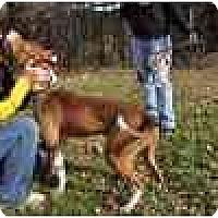 Adopt A Pet :: Kojack - Chicago, IL