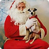 Adopt A Pet :: Romantic Rosie - Concord, CA