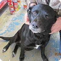 Adopt A Pet :: Mia - Franklin, NH