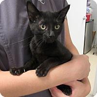 Adopt A Pet :: Pippa - Athens, GA