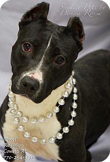 Pit Bull Terrier Mix Dog for adoption in Newnan City, Georgia - Noel