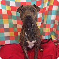 Adopt A Pet :: Eryka - Snyder, TX