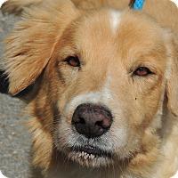 Adopt A Pet :: Buddy - Harrisonburg, VA