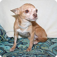 Mixed Breed (Small) Mix Dog for adoption in Bradenton, Florida - Noodlebug