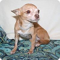Adopt A Pet :: Noodlebug - Bradenton, FL