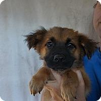 Adopt A Pet :: Jake - Oviedo, FL