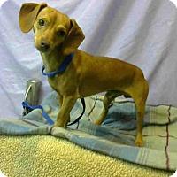 Adopt A Pet :: URGENT 5/27 @ DEVORE - San Bernardino, CA