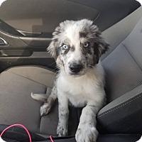 Adopt A Pet :: Julia meet me 6/2 - Manchester, CT
