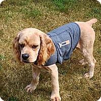 Adopt A Pet :: Cody-Deaf - Surrey, BC