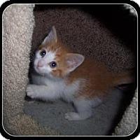 Adopt A Pet :: Ajay - South Plainfield, NJ
