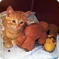Adopt A Pet :: Lil Jack - Medford, NJ