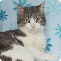 Adopt A Pet :: Precious - Elmwood Park, NJ